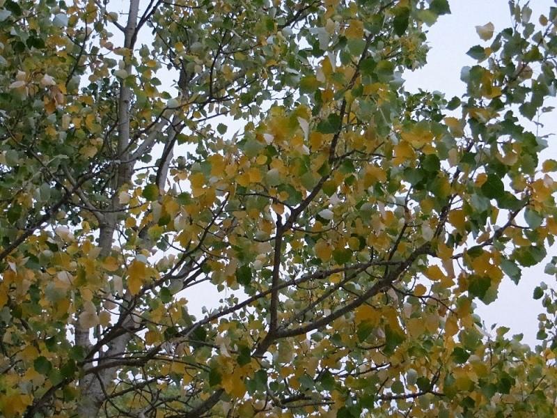 Déjà un petit air d'automne ... Aoat_221