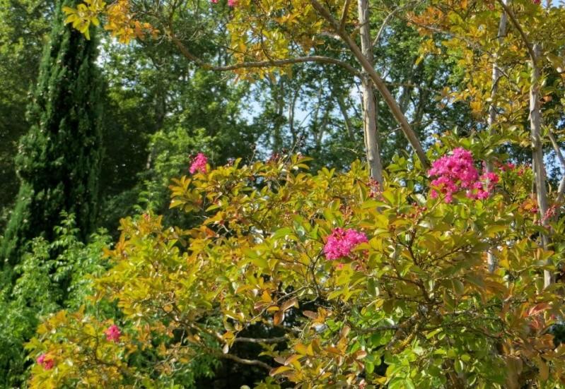 Déjà un petit air d'automne ... Aoat_222