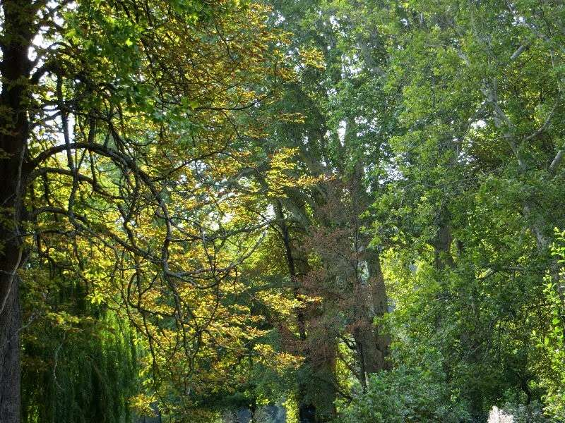 Déjà un petit air d'automne ... Aoat_223