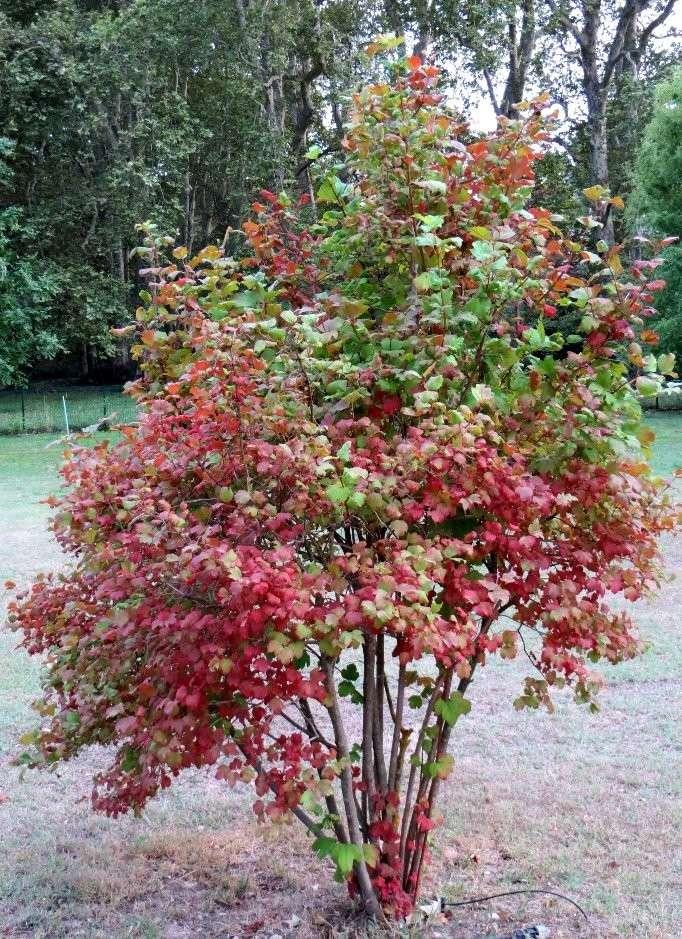 Déjà un petit air d'automne ... Septem12