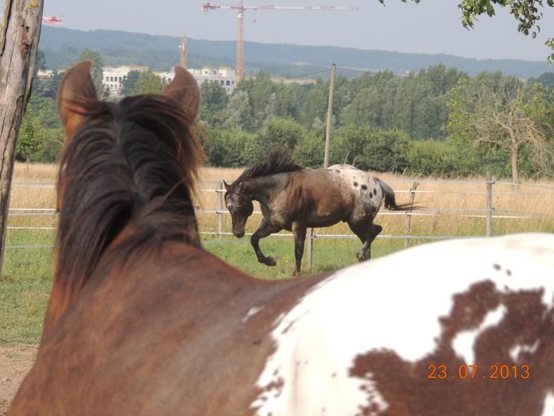 Mes chevaux, un mélange d'un peu tout le monde! - Page 7 Campbe25