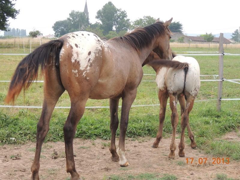 Mes chevaux, un mélange d'un peu tout le monde! - Page 7 Choomy22