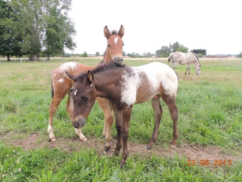 Mes chevaux, un mélange d'un peu tout le monde! - Page 7 Dodge_12