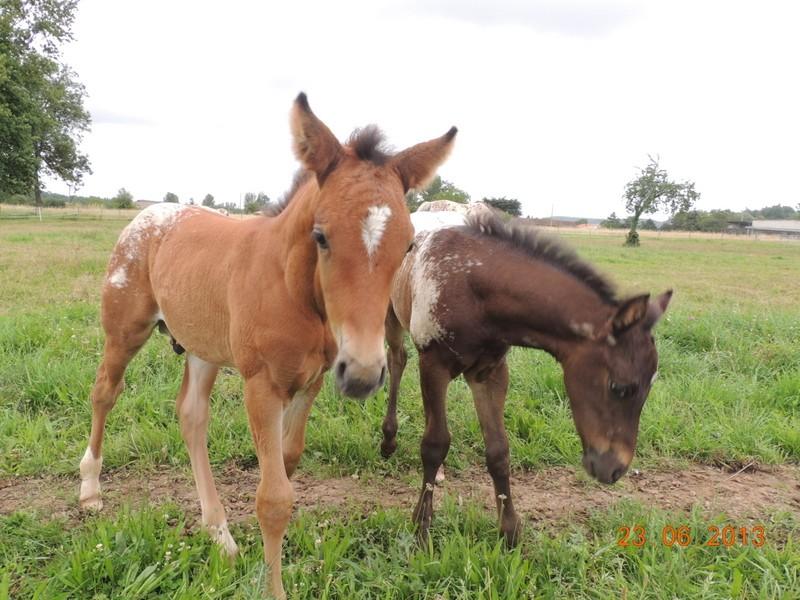 Mes chevaux, un mélange d'un peu tout le monde! - Page 7 Dodge_13