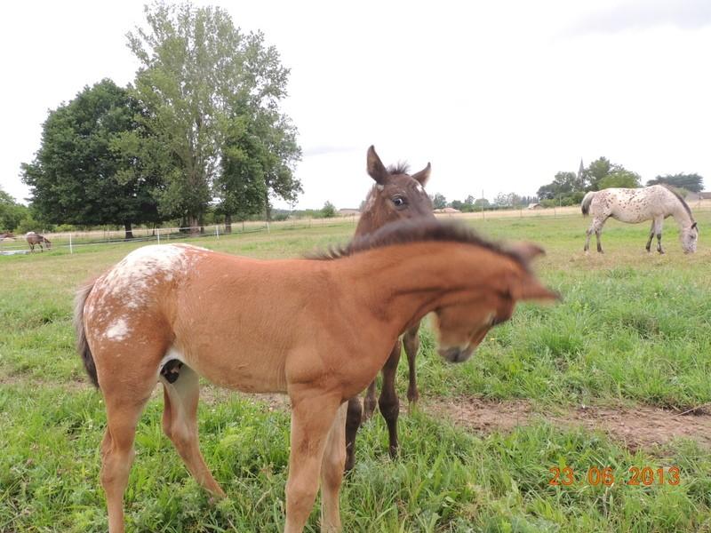 Mes chevaux, un mélange d'un peu tout le monde! - Page 7 Dodge_14