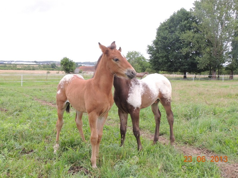 Mes chevaux, un mélange d'un peu tout le monde! - Page 7 Dodge_15