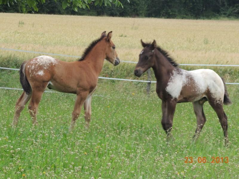Mes chevaux, un mélange d'un peu tout le monde! - Page 7 Dodge_17