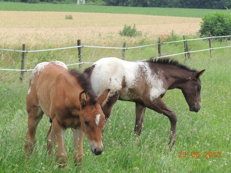 Mes chevaux, un mélange d'un peu tout le monde! - Page 7 Dodge_18