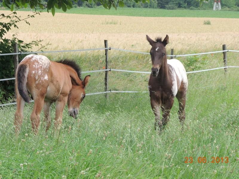 Mes chevaux, un mélange d'un peu tout le monde! - Page 7 Dodge_19
