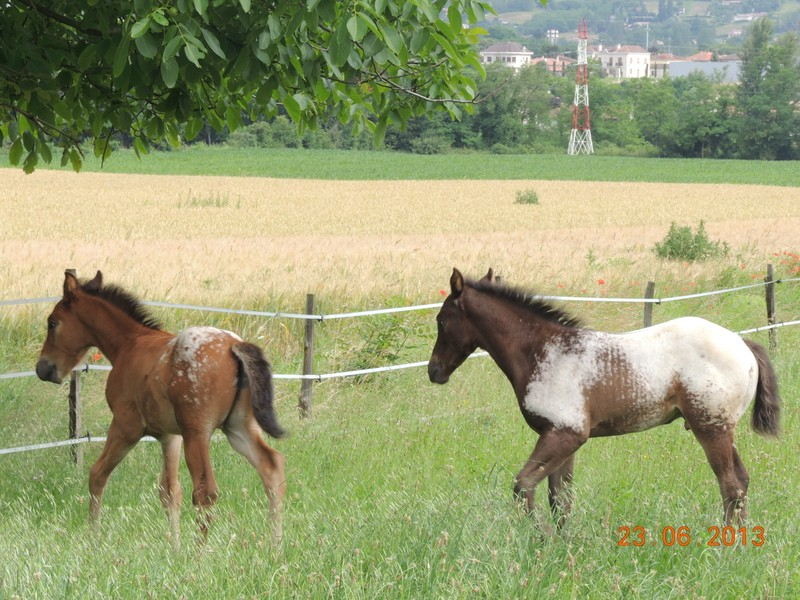 Mes chevaux, un mélange d'un peu tout le monde! - Page 7 Dodge_20
