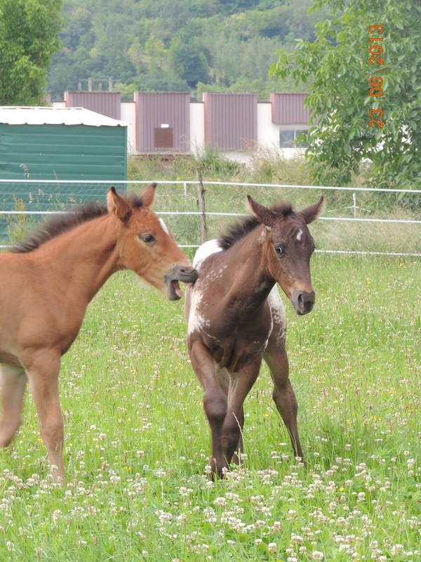 Mes chevaux, un mélange d'un peu tout le monde! - Page 7 Dodge_21