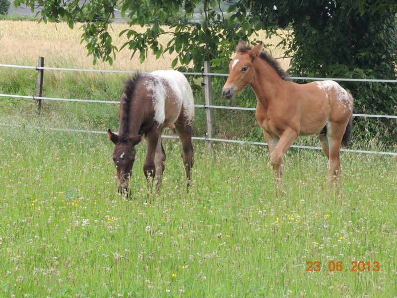 Mes chevaux, un mélange d'un peu tout le monde! - Page 7 Dodge_22