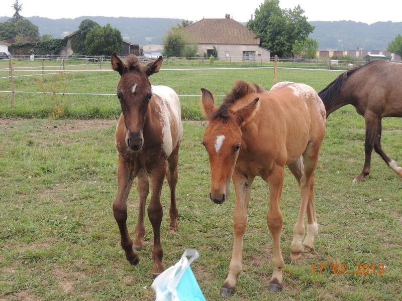 Mes chevaux, un mélange d'un peu tout le monde! - Page 7 Dodge_23