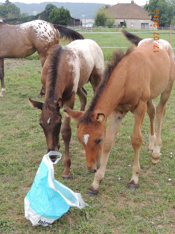 Mes chevaux, un mélange d'un peu tout le monde! - Page 7 Dodge_24