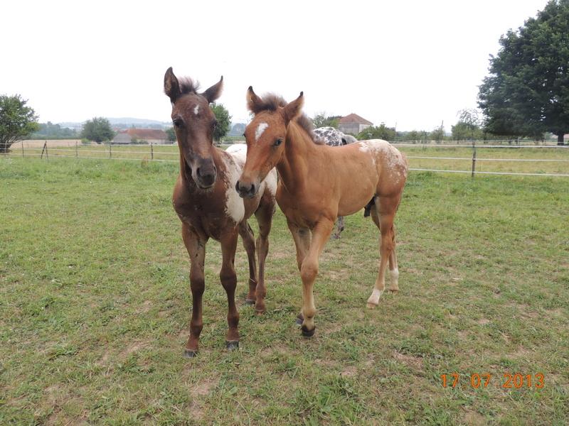 Mes chevaux, un mélange d'un peu tout le monde! - Page 7 Dodge_25