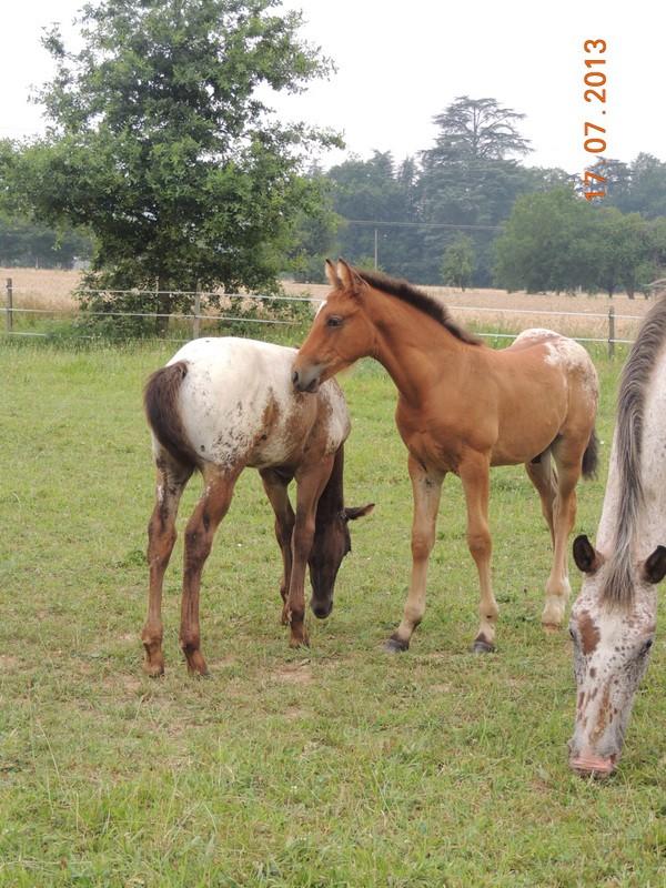Mes chevaux, un mélange d'un peu tout le monde! - Page 7 Dodge_27