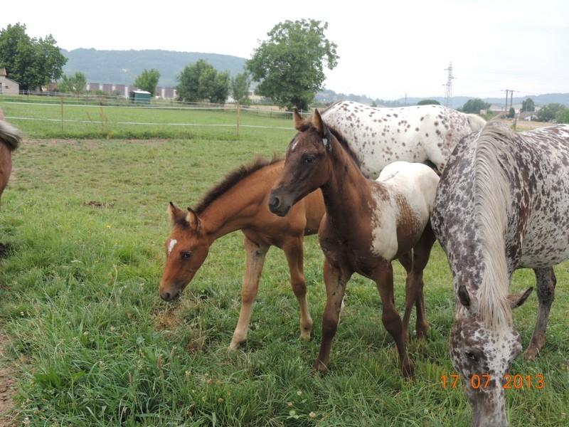 Mes chevaux, un mélange d'un peu tout le monde! - Page 7 Dodge_28