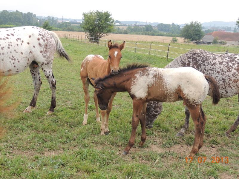 Mes chevaux, un mélange d'un peu tout le monde! - Page 7 Dodge_30
