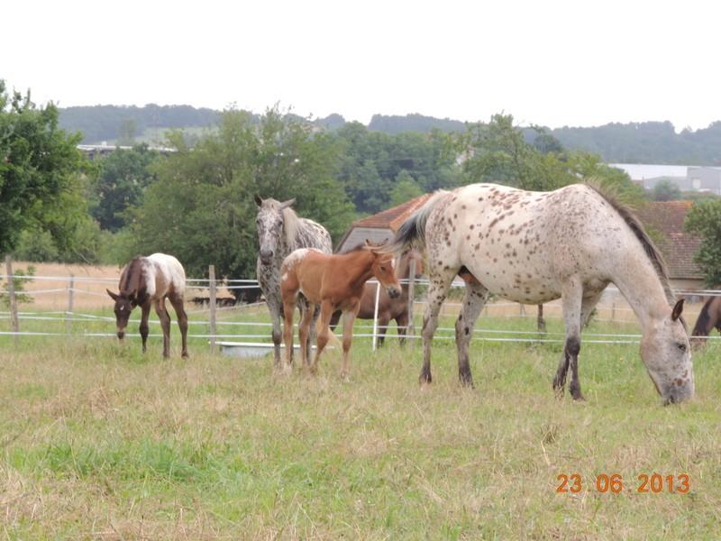 Mes chevaux, un mélange d'un peu tout le monde! - Page 7 Groupe10