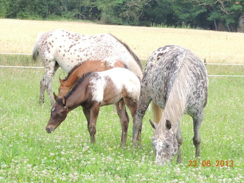 Mes chevaux, un mélange d'un peu tout le monde! - Page 7 Groupe12
