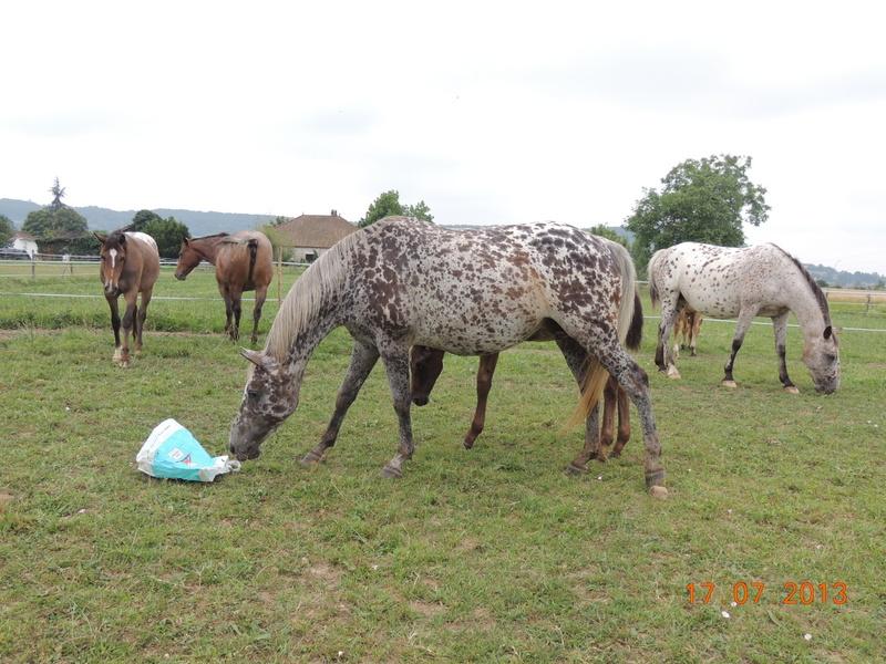 Mes chevaux, un mélange d'un peu tout le monde! - Page 7 Groupe13