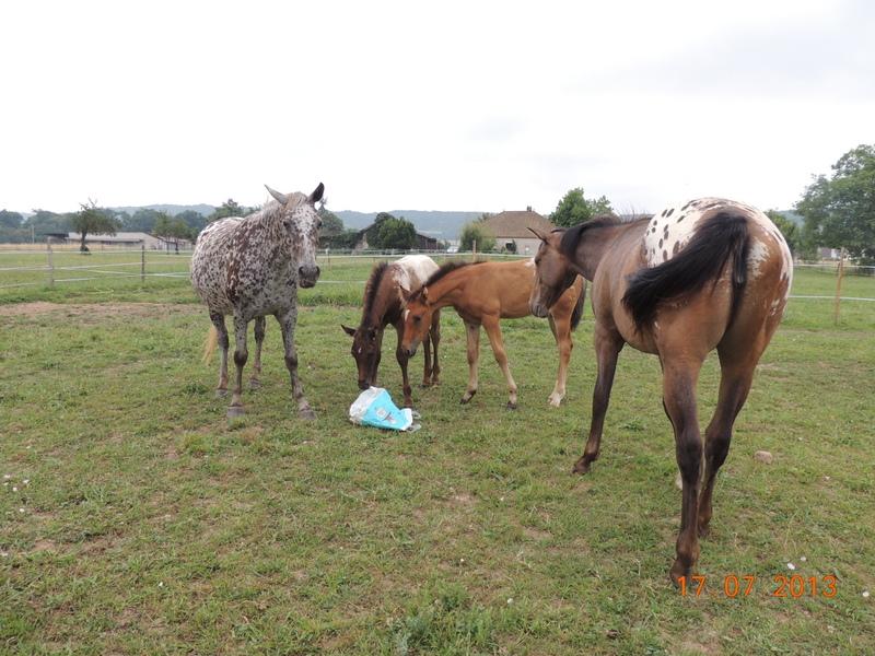 Mes chevaux, un mélange d'un peu tout le monde! - Page 7 Groupe14