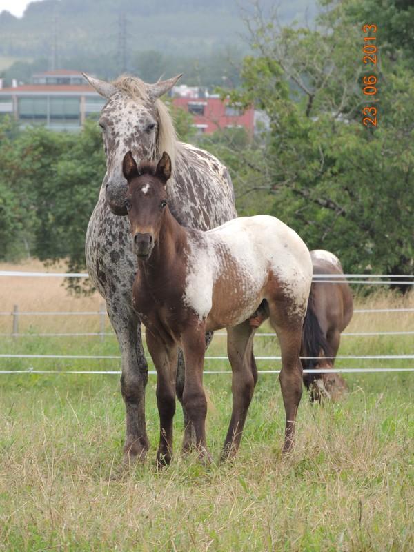 Mes chevaux, un mélange d'un peu tout le monde! - Page 7 Opium_10