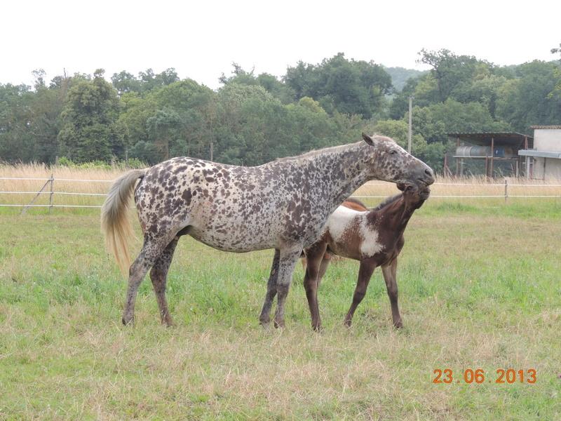 Mes chevaux, un mélange d'un peu tout le monde! - Page 7 Opium_11