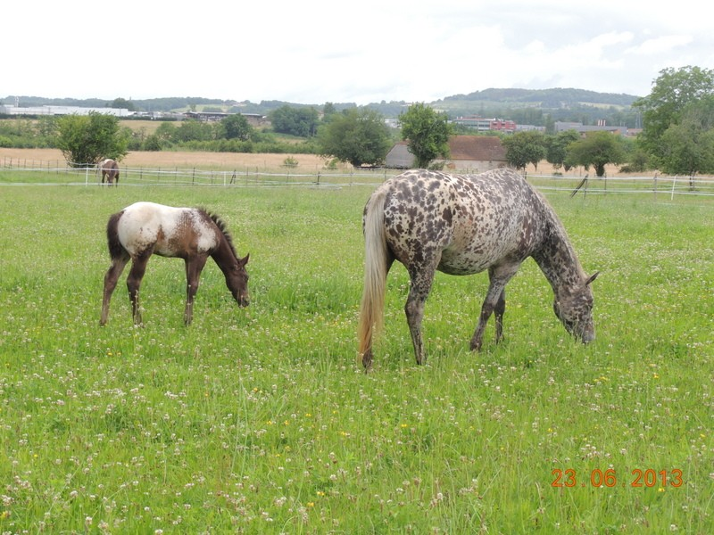 Mes chevaux, un mélange d'un peu tout le monde! - Page 7 Opium_12