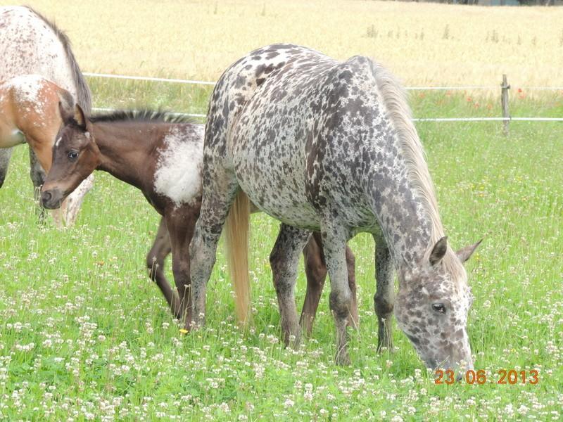 Mes chevaux, un mélange d'un peu tout le monde! - Page 7 Opium_13