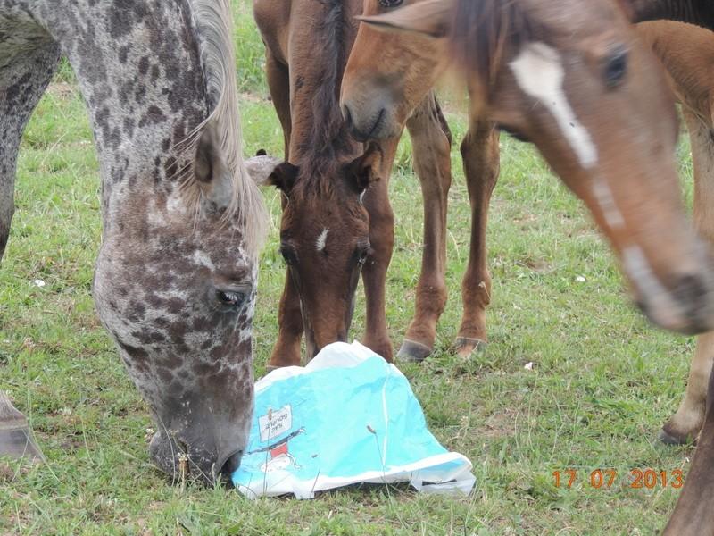 Mes chevaux, un mélange d'un peu tout le monde! - Page 7 Opium_19