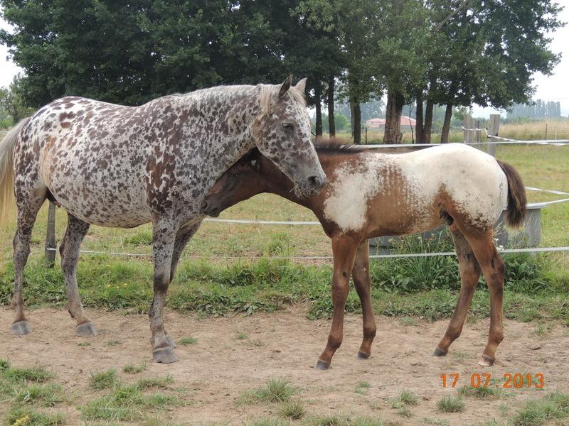 Mes chevaux, un mélange d'un peu tout le monde! - Page 7 Opium_20