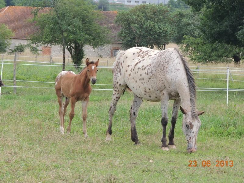 Mes chevaux, un mélange d'un peu tout le monde! - Page 7 Quarin10