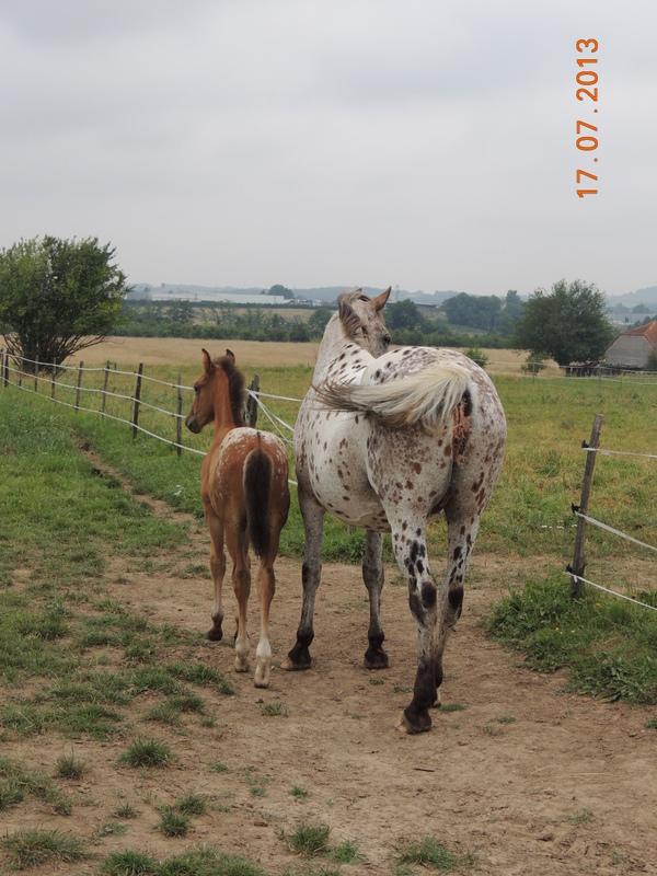 Mes chevaux, un mélange d'un peu tout le monde! - Page 7 Quarin16