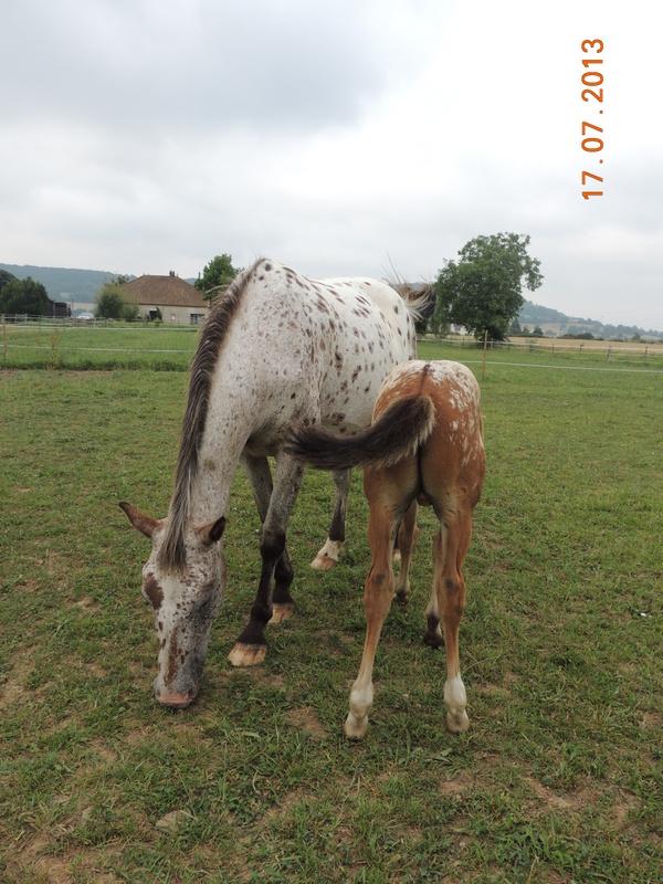 Mes chevaux, un mélange d'un peu tout le monde! - Page 7 Quarin17