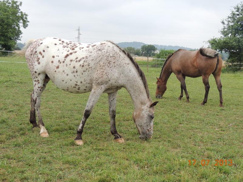 Mes chevaux, un mélange d'un peu tout le monde! - Page 7 Quarin18