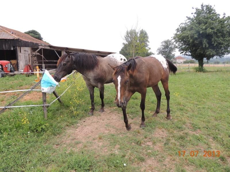 Mes chevaux, un mélange d'un peu tout le monde! - Page 7 Undy_e10