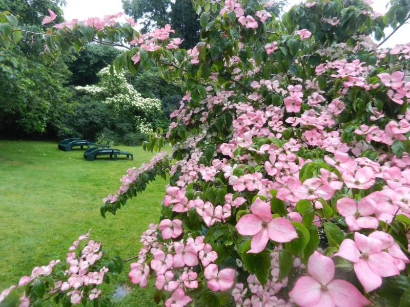 floraisons des arbres et des arbustes - Page 5 01110