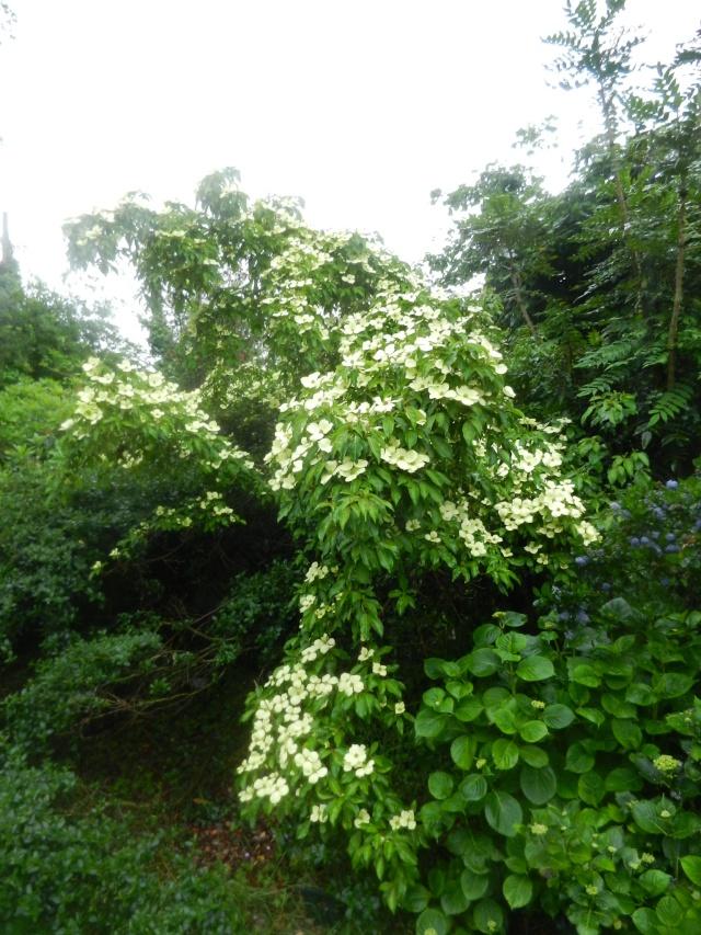 floraisons des arbres et des arbustes - Page 5 01410