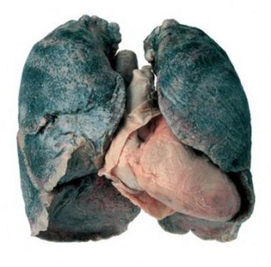 Pušenje pomaže  Crna-p10