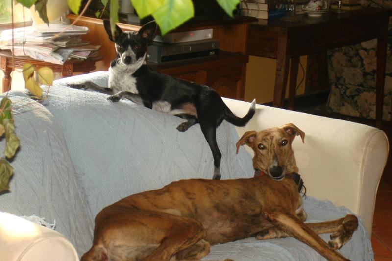 """Les"""" Doggies"""" de La Rive - Page 5 Dsc00714"""