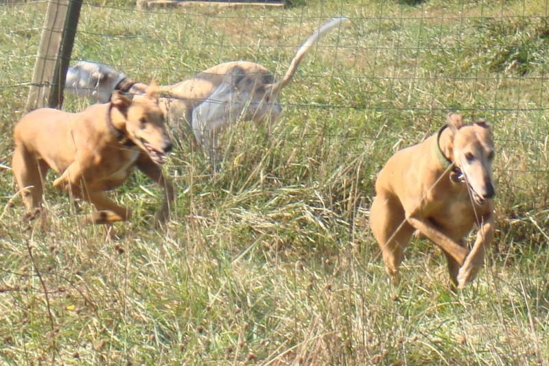 """Les"""" Doggies"""" de La Rive - Page 5 Dsc00913"""