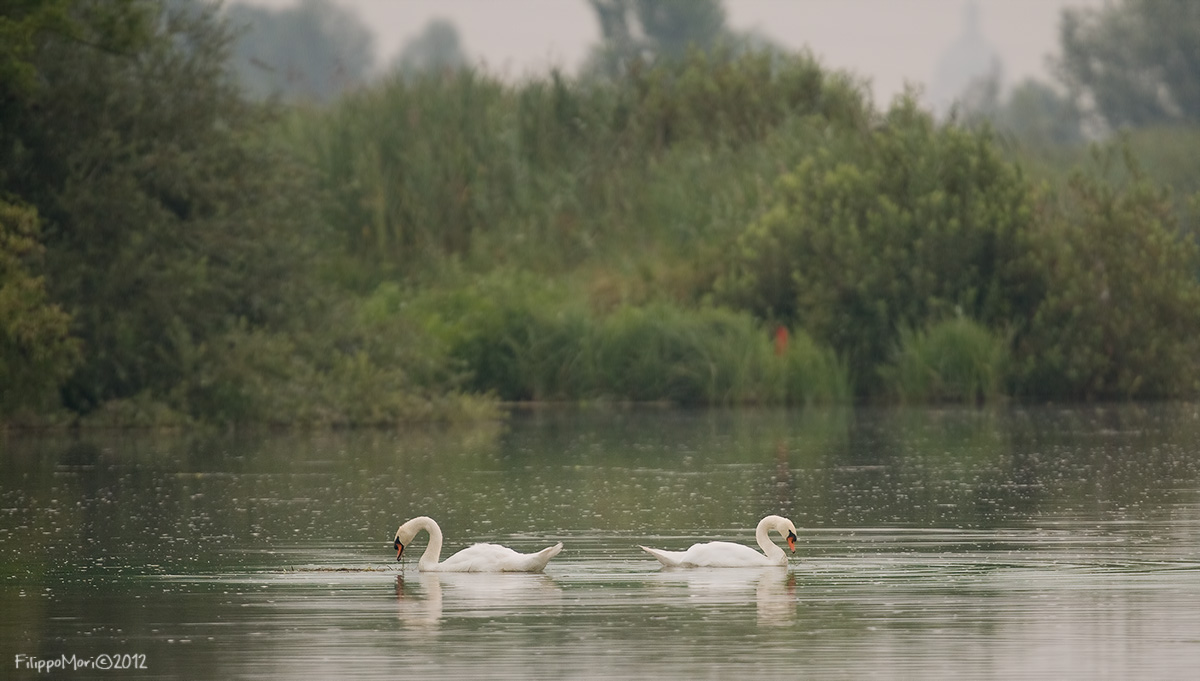 Gita in battello su Mincio e Lago superiore - reportage Cigni_10
