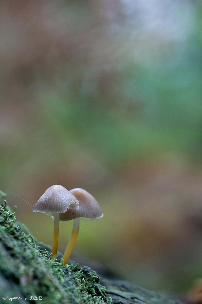 Primi funghi... Funghe10