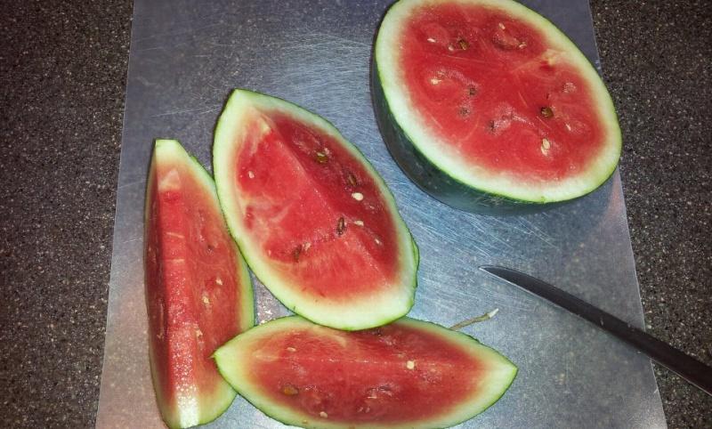 Planting Cantaloupe/Watermelon/Pumpkin Vertically? 56288210