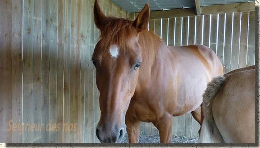 Idée de présentation de votre cheval ou de votre cheval préféré(e) P1040610