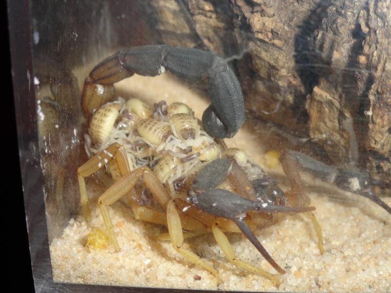 Envyizm's scorpion pictures - Page 7 Dsc00710