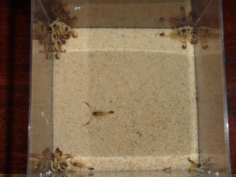 Envyizm's scorpion pictures - Page 7 Dsc00711