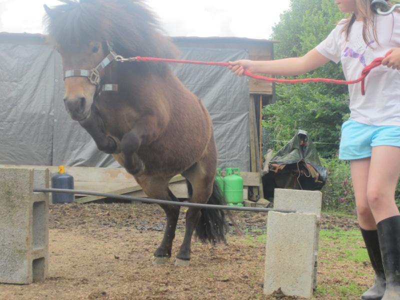Photos de vos chevaux [ plus de 50 cm ♪ ] Img_0011