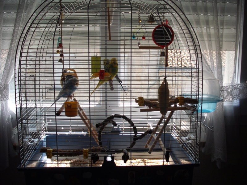 ma cage : avis et conseils 12510